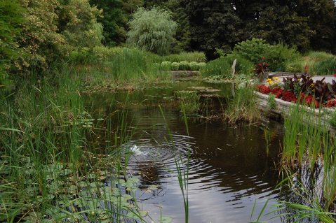 Image result for garden pond, ontario