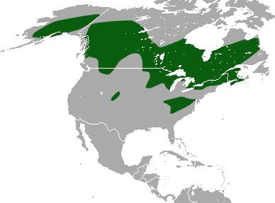 American Pygmy Shrew Wikipedia
