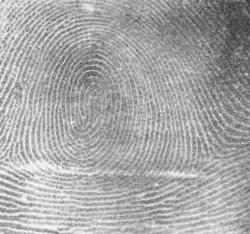 Picture of a whorl fingerprint pattern
