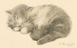 Sleeping Kitty Drawing