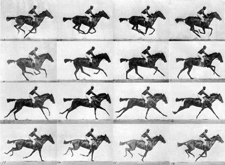 Muybridge horse - multiple frames