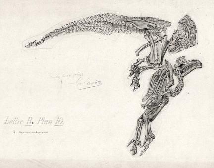 File:Iguanodon4.jpg
