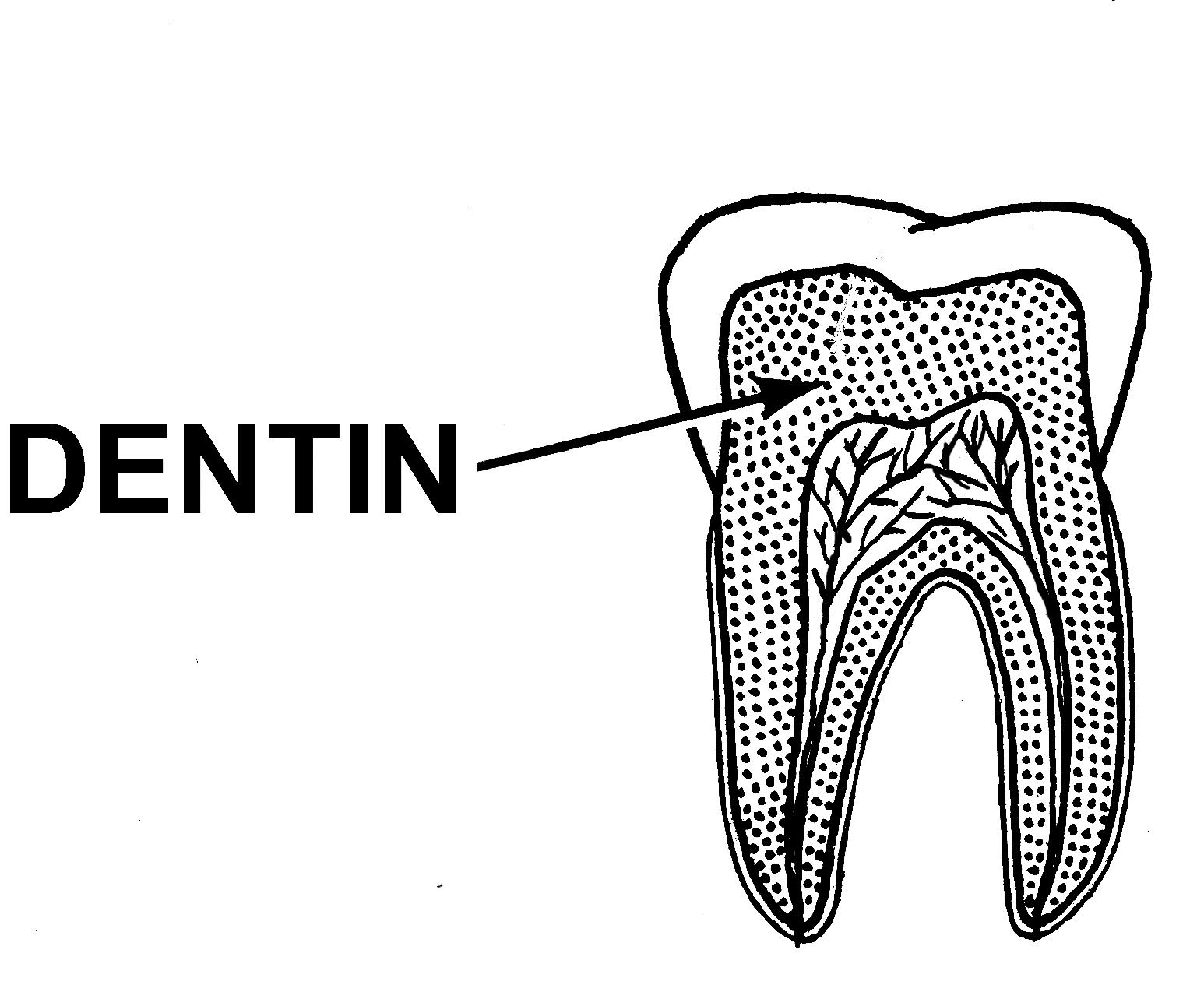 File Dentin Psf