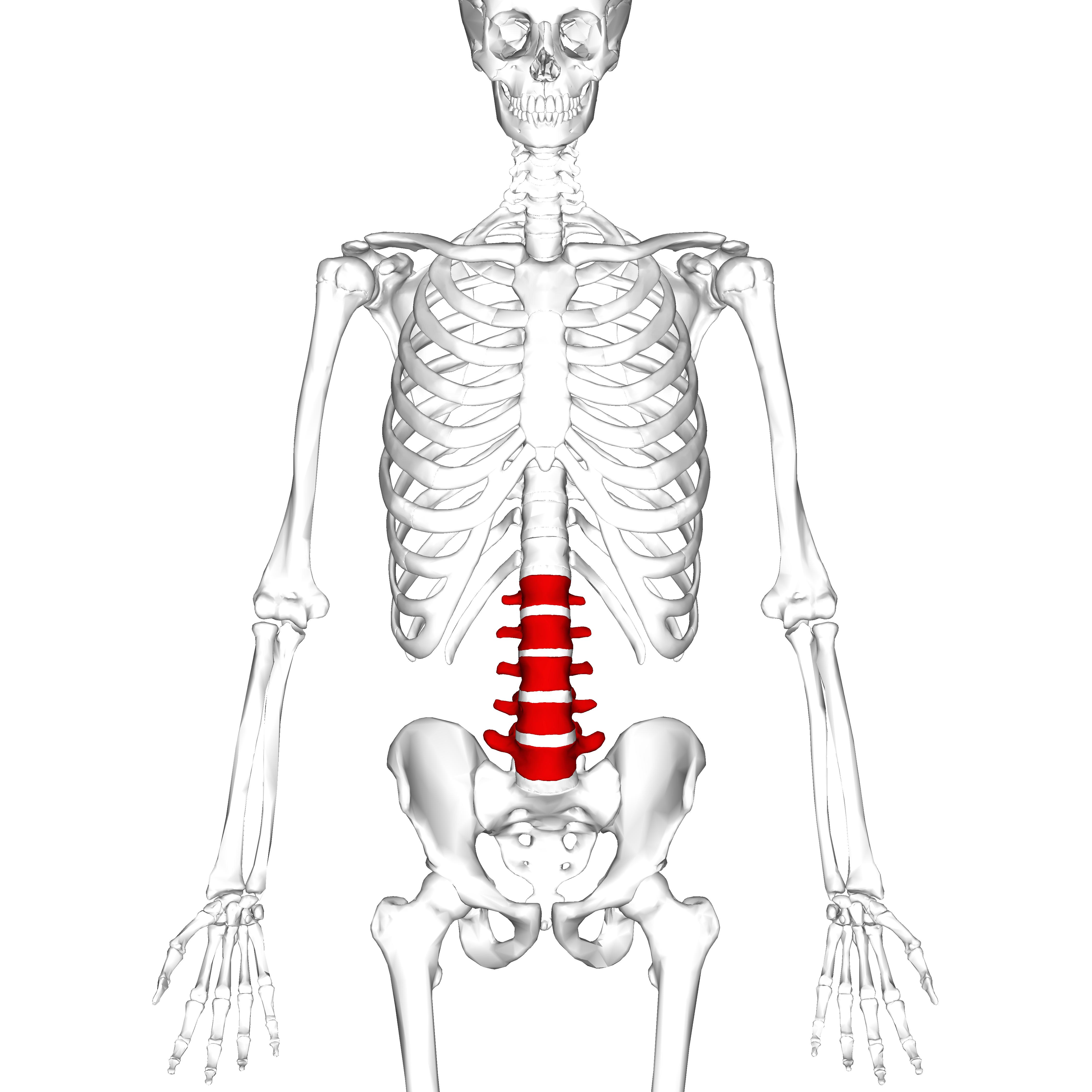 File Lumbar Vertebrae Anterior
