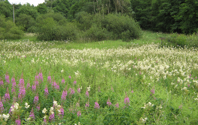 File:Field of Meadowsweet - geograph.org.uk - 1404004.jpg
