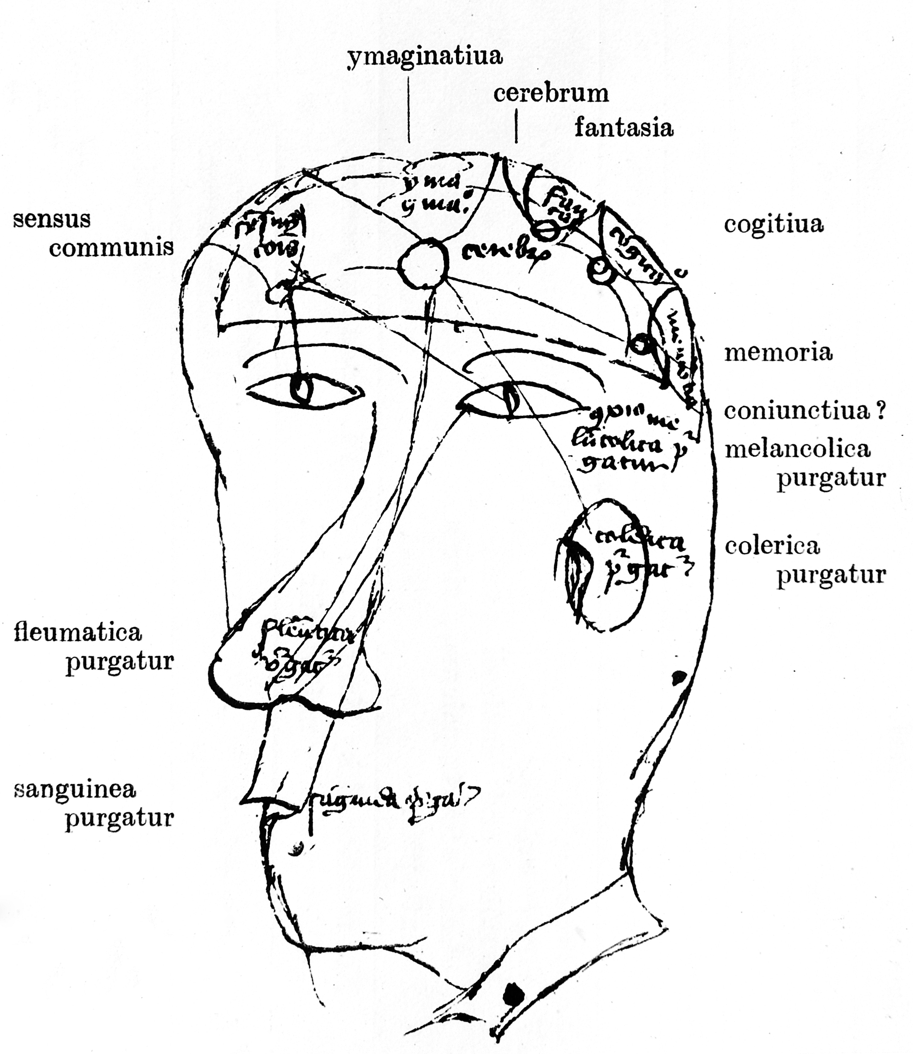 File The Brain And Ways Of Excretion Of Humours Circa