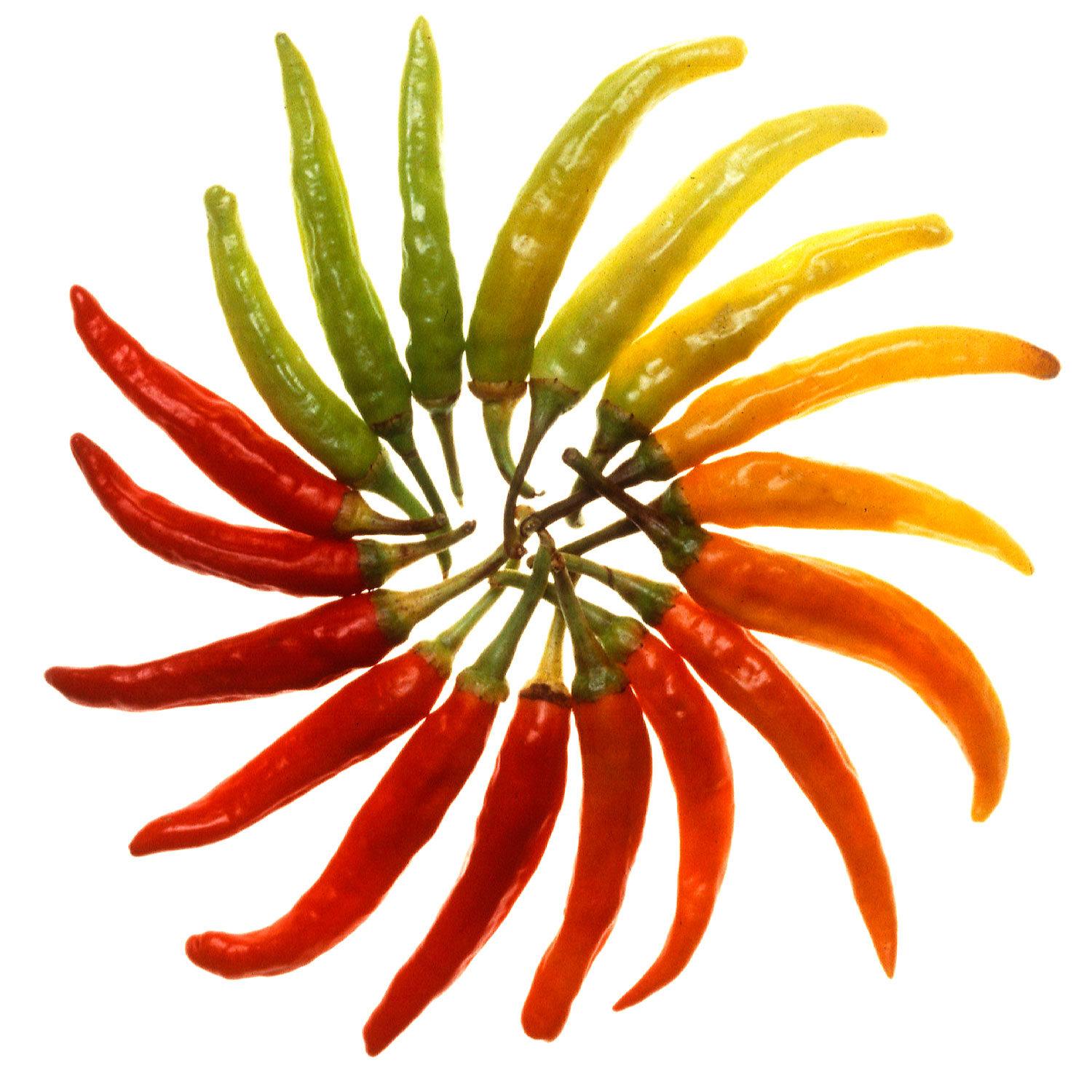 Hot Pepper Color Wheel