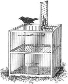 A cage trap