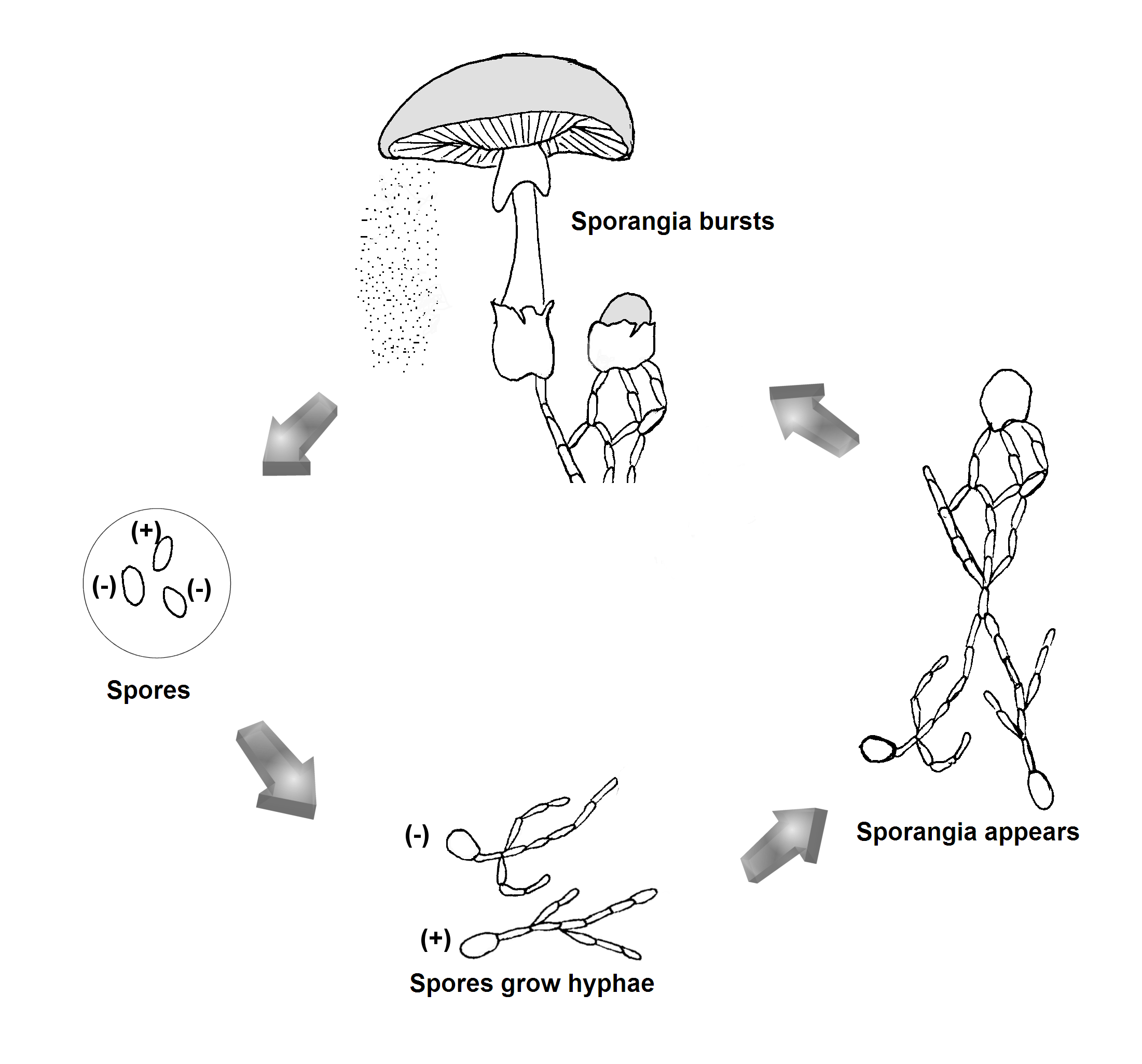 Bacteria Labeled Diagram