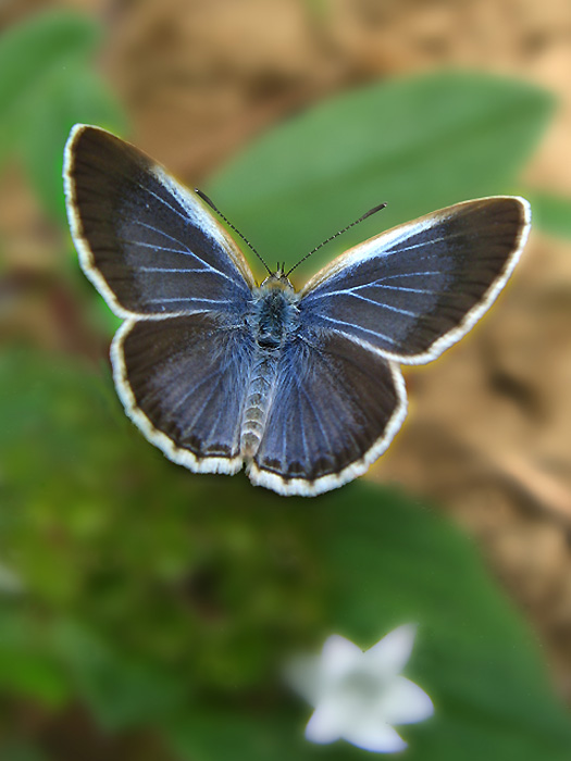 Bahasa Indonesia: Salah satu jenis kupu yang a...