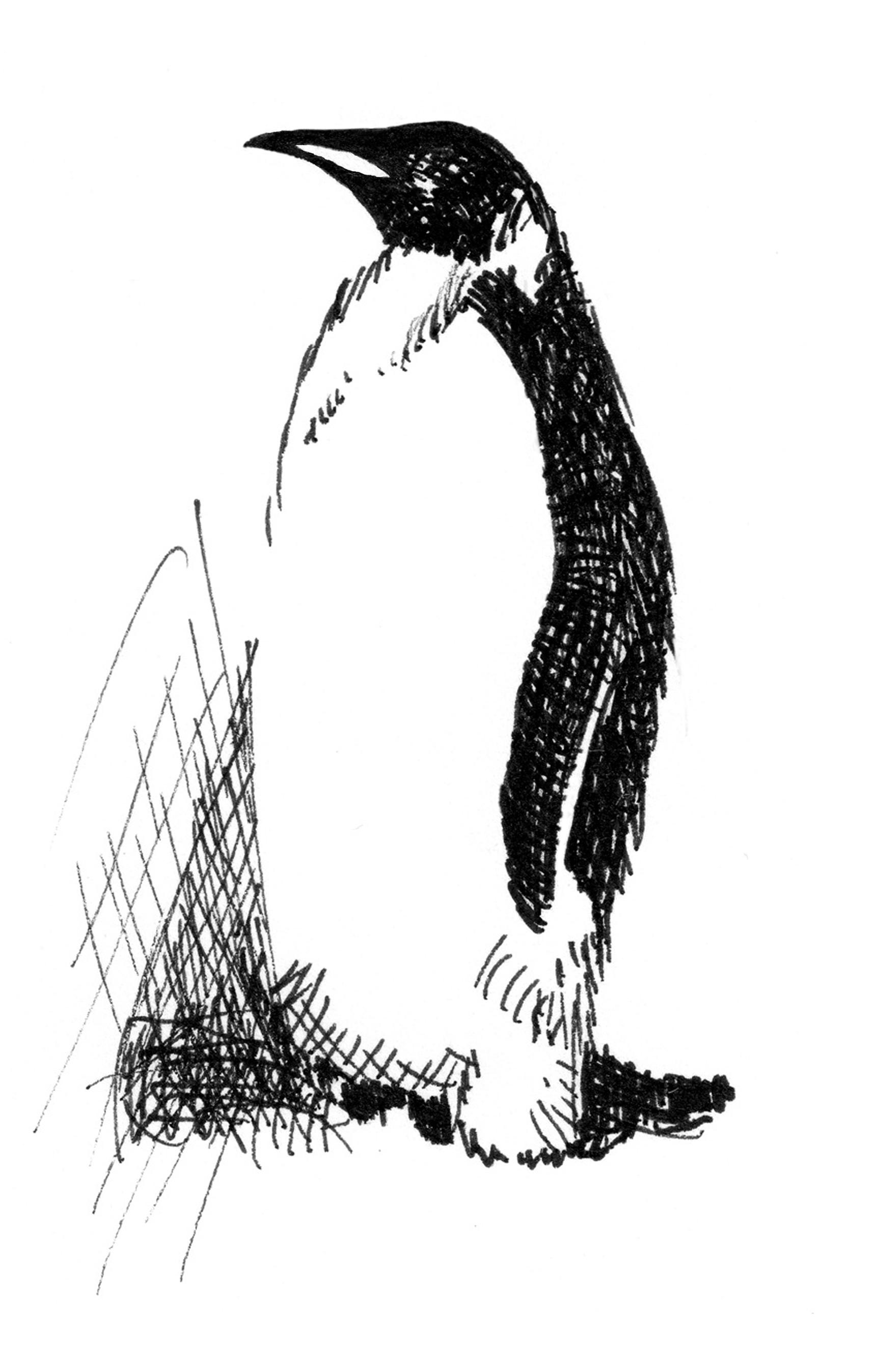 File Single Emperor Penguin