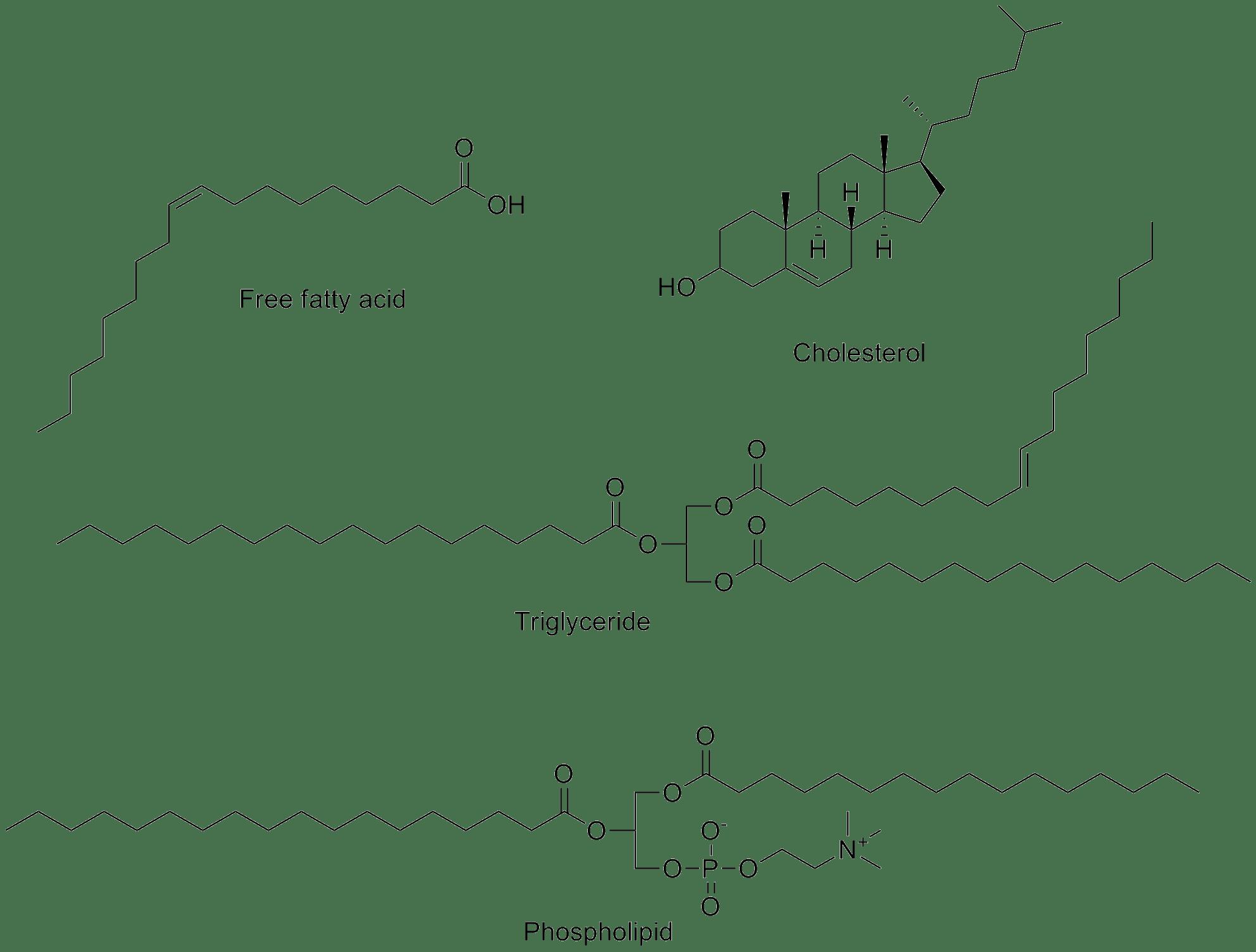 File Common Lipids