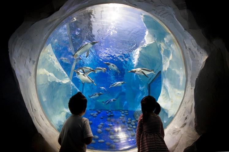 Cheap attraction tickets sea life centre