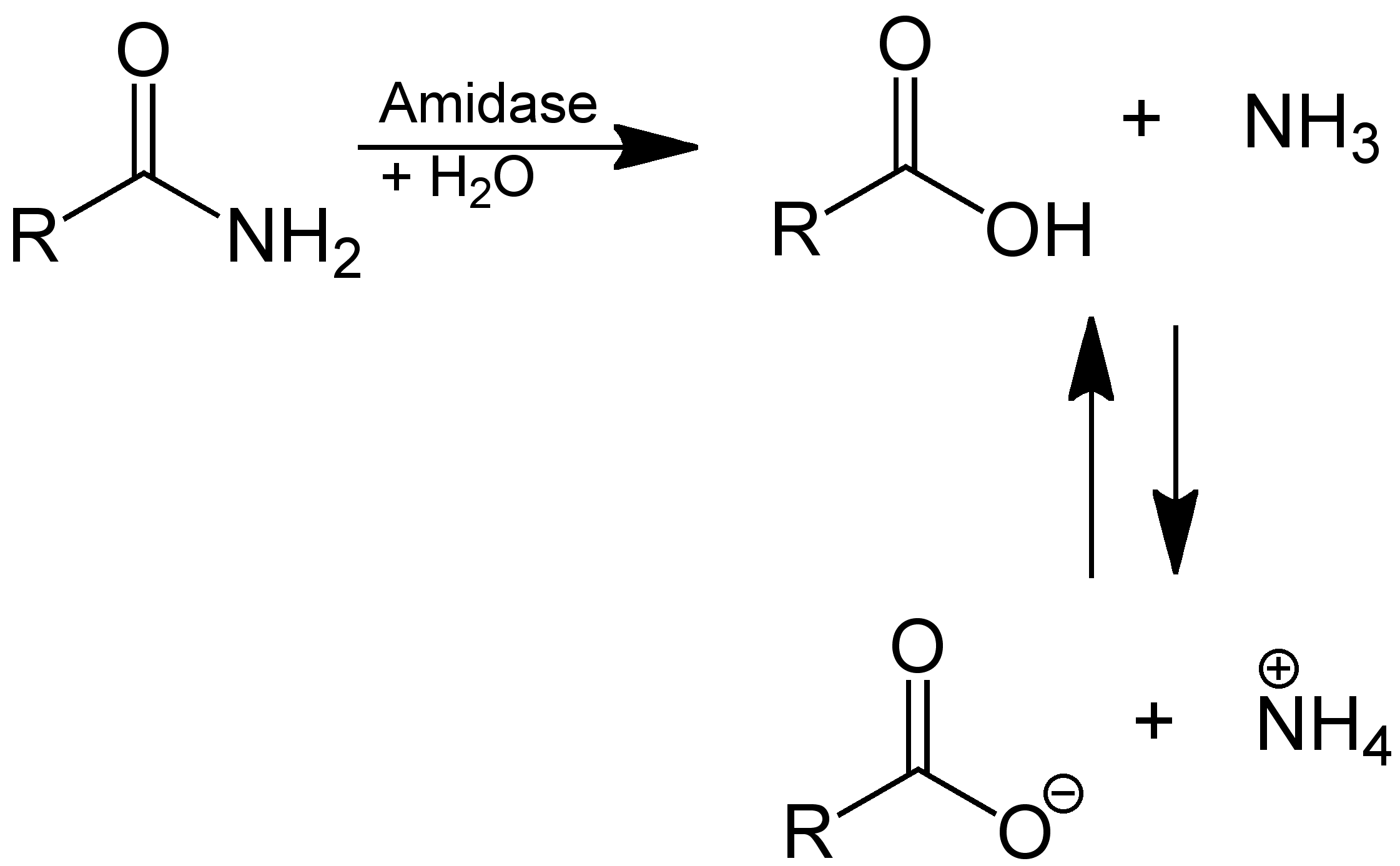 Chemistry By Turtle Organic Chemistry Ester And Amide 2