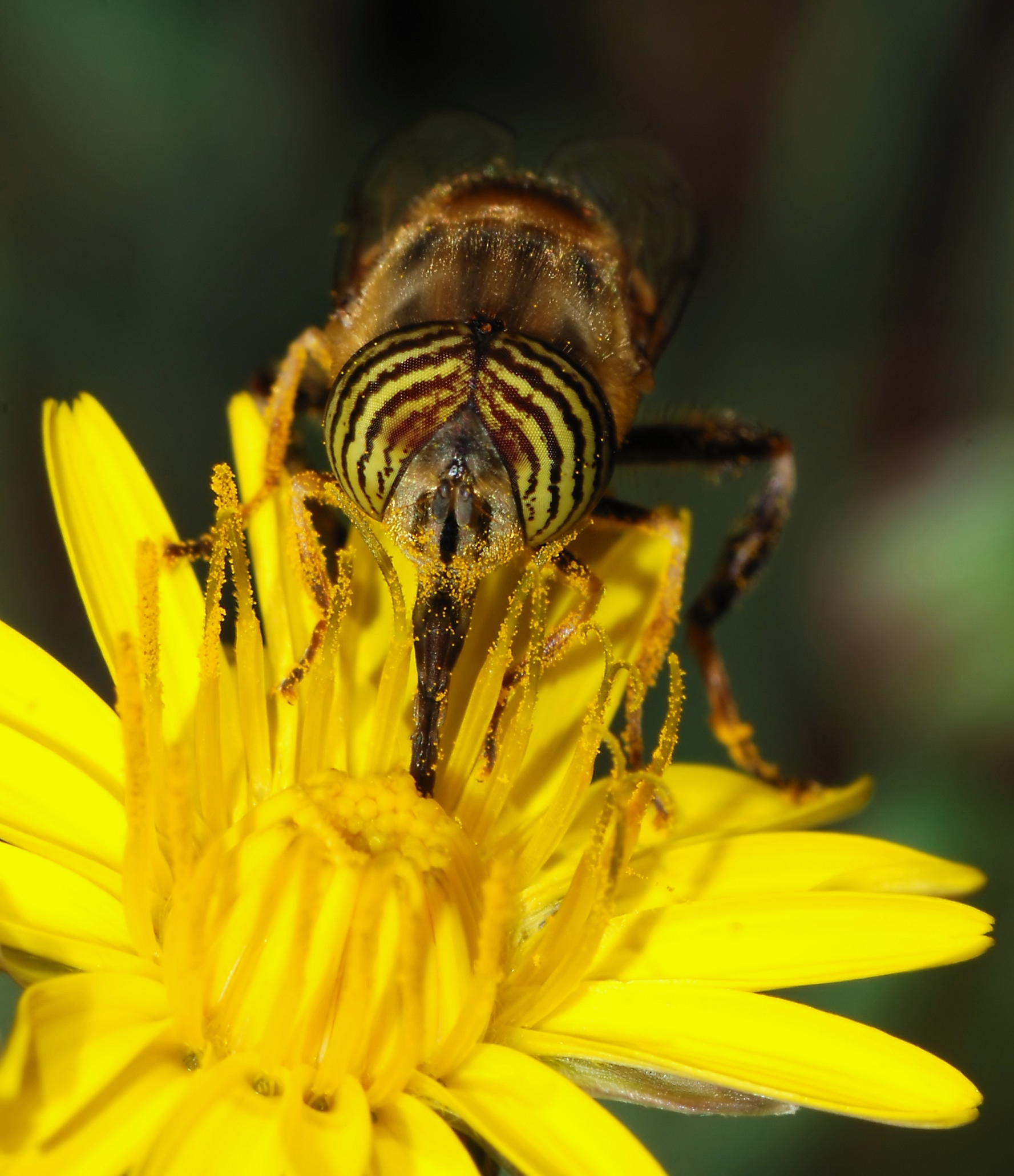 Buzz Or Flutter Who Matters When It Comes To Pollination