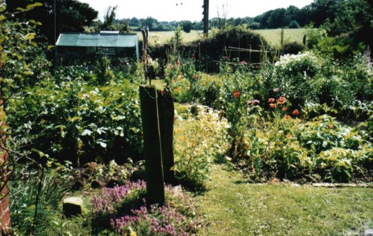 Best Home Vegetable Garden Design