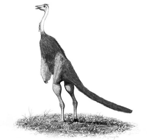 Struthiomimus altus jconway.jpg