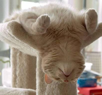 Sleep cat
