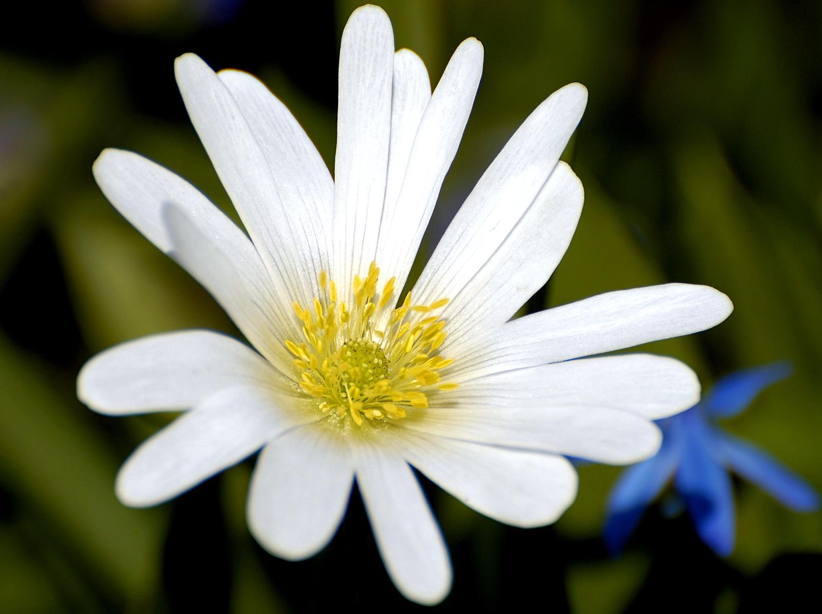 Floare pentru eroi
