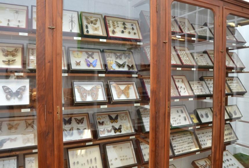 Sala n.º IV (Artrópodos) de la colección de Ciencias Naturales