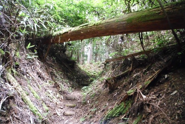 Nyonin Michi.  One of the Pilgrimage Routes in Kumano.