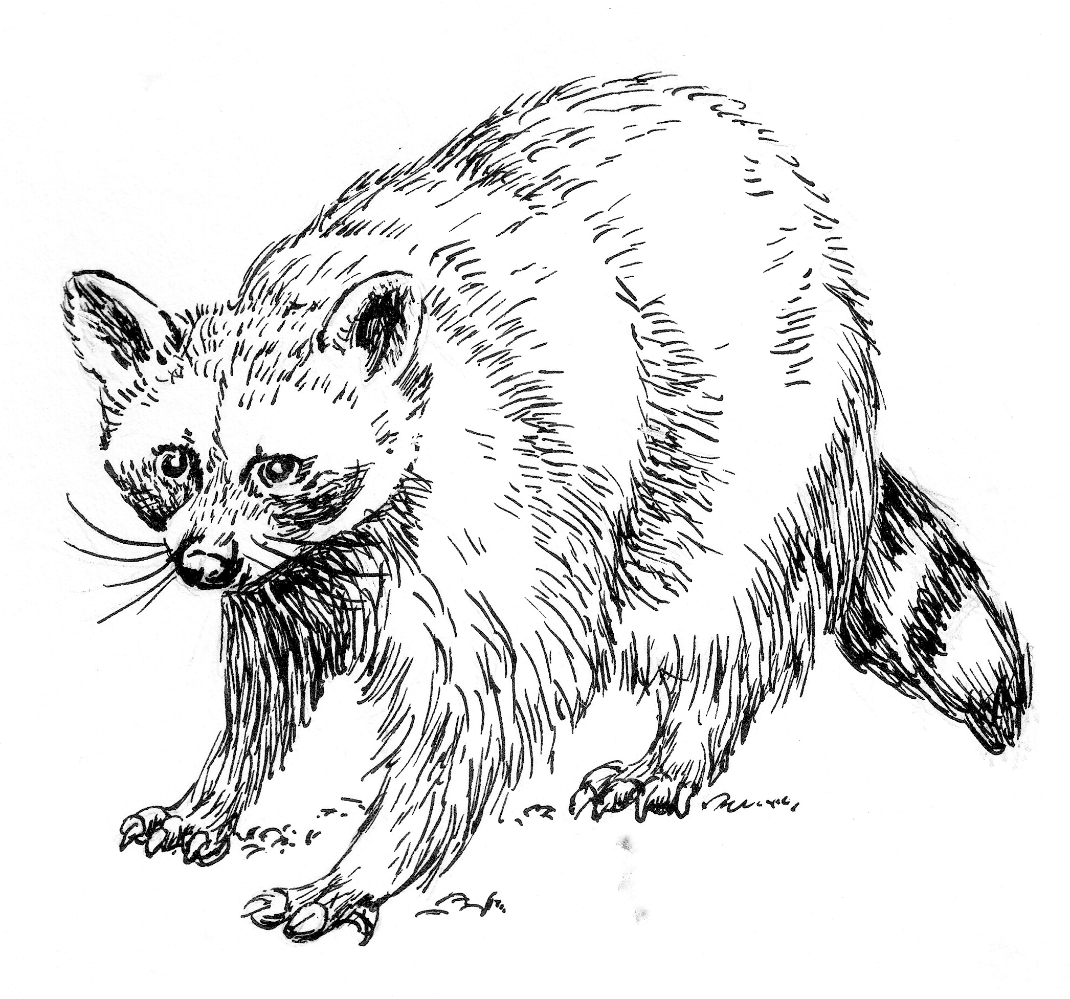 File Raccoon Line Art Psf R Cropped