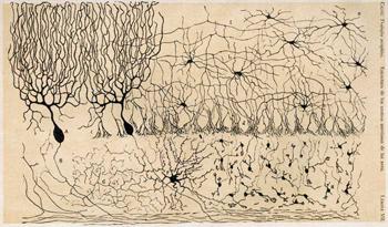 tintes de Ramon y Cajal sobre neuronas