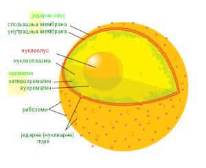 Jedarce  Wikipedia