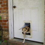 Pet Door Wikipedia