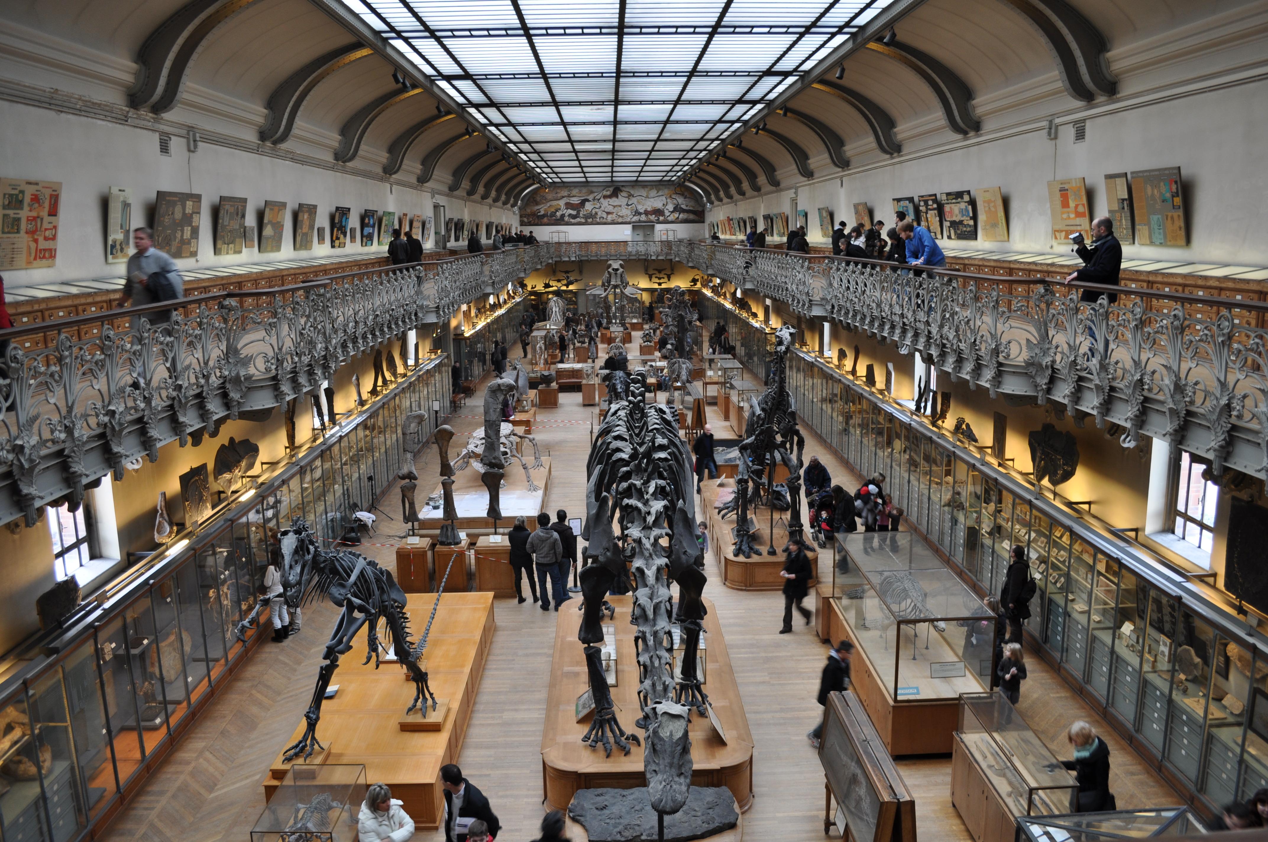 Afbeeldingsresultaat voor galerie de paleontologie