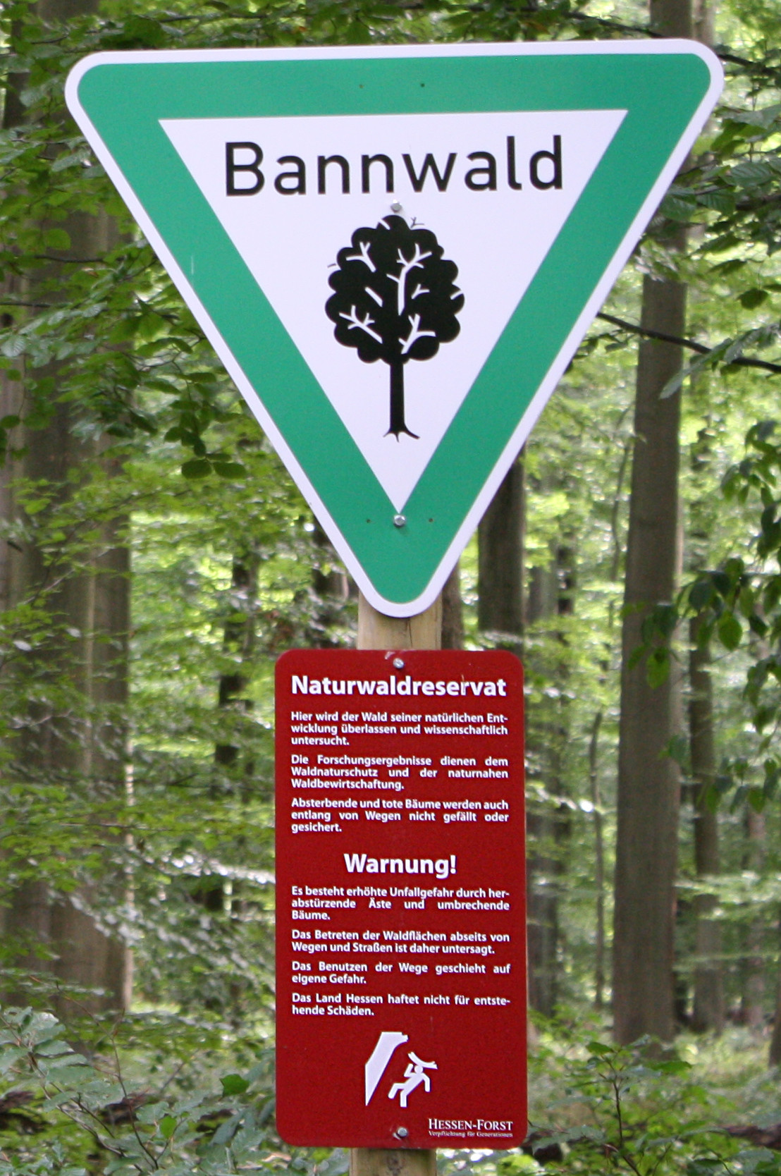 Forests have lots of shade b woods and forests both have natural areas filled with trees, but woods are smaller a. List Of Types Of Formally Designated Forests Wikipedia