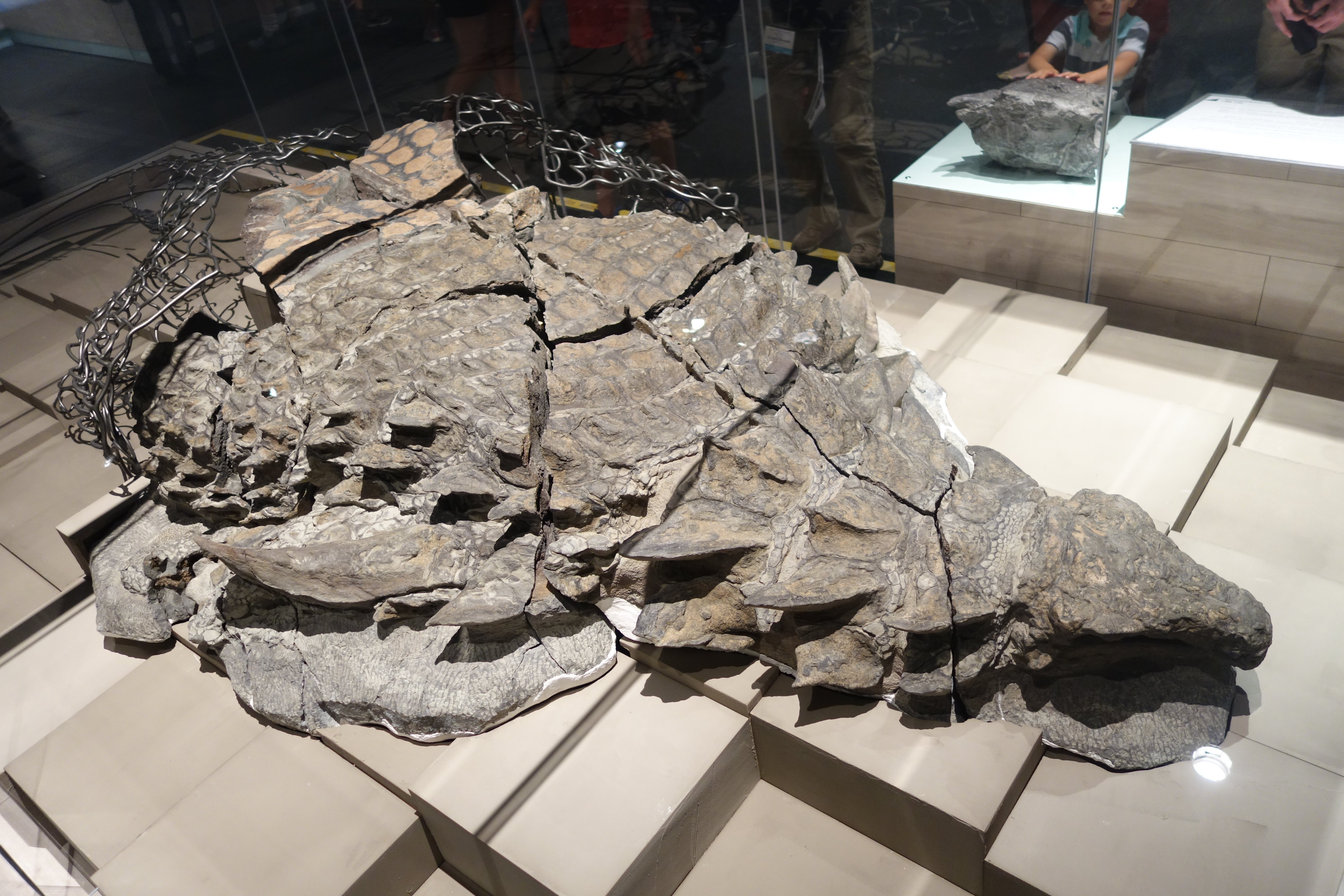 The Best Preserved Dinosaur Ever Discovered This