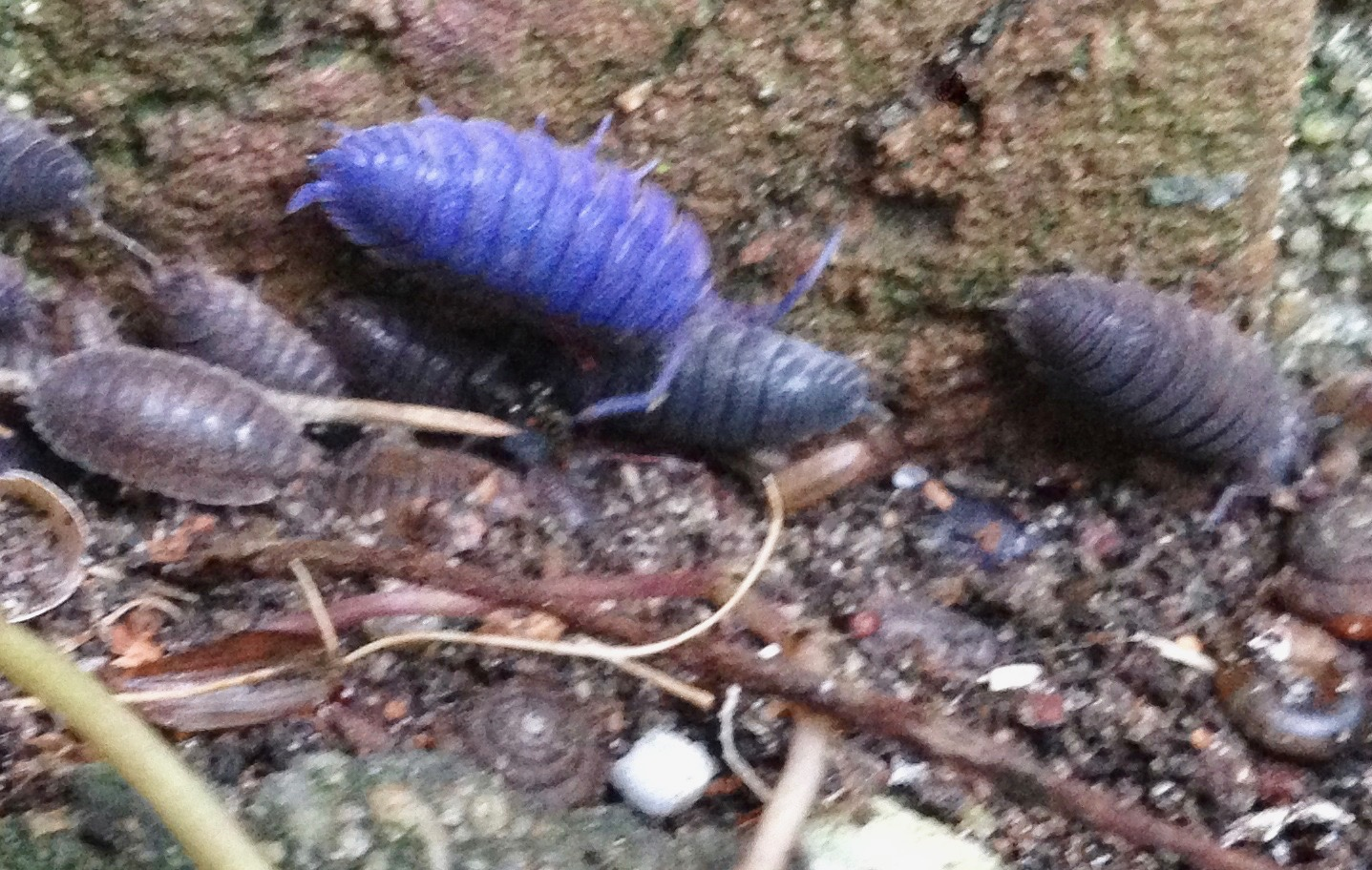 Talk Woodlouse