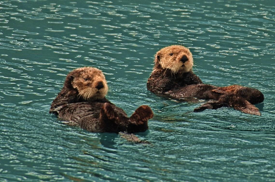 Sea Otters Good Dog Food For Pitbulls