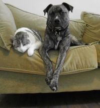 foster a dog