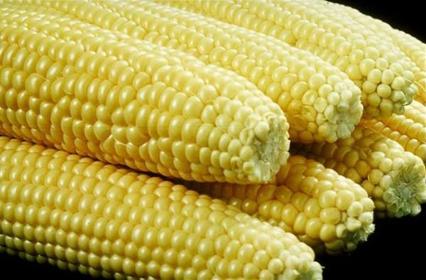 Sweet corn - Wikipedia