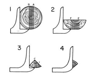 Quarter sawing | Wiki | Everipedia