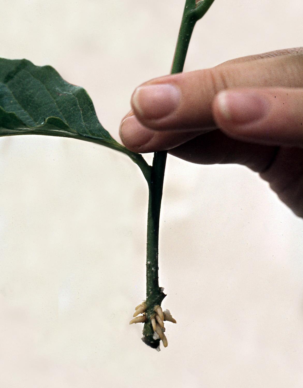 Cutting Plant