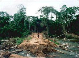 DeforestationinBrazil