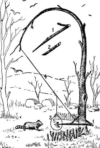 Diagram Snares And Traps Diagram Schematic Circuit Wilma Cobb
