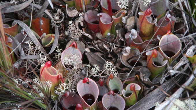 Water Plant Terrarium