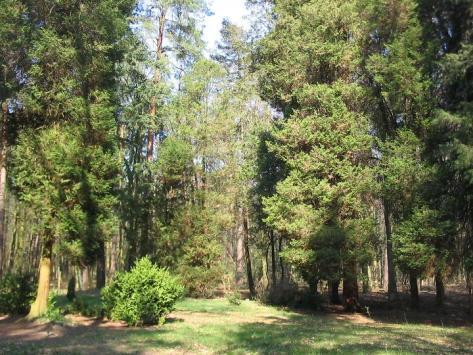 Dauerwaldrevier2 Baerenthoren
