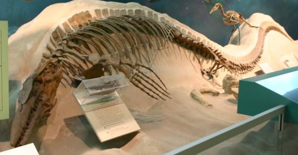 Tylosaurus Wikipedia