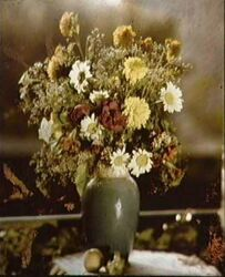 Early colour photograph of flowers by Lippmann
