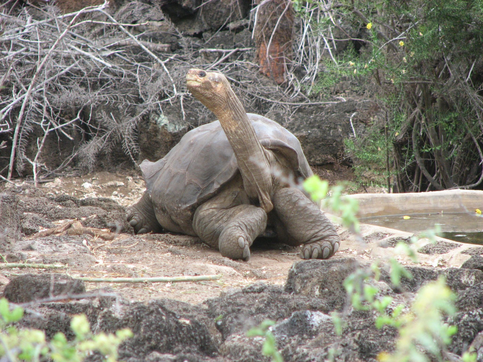 Lonesome George 1.jpg