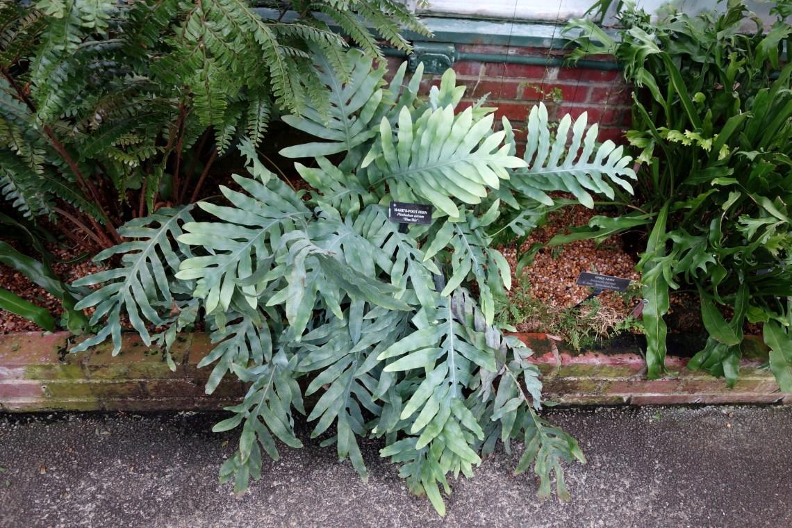 Image Result For Longwood Gardens