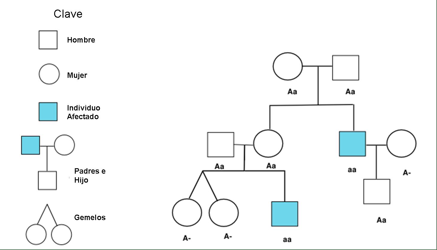File Diagrama Pedigri