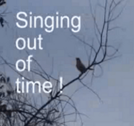 English: Singing-out-of-time