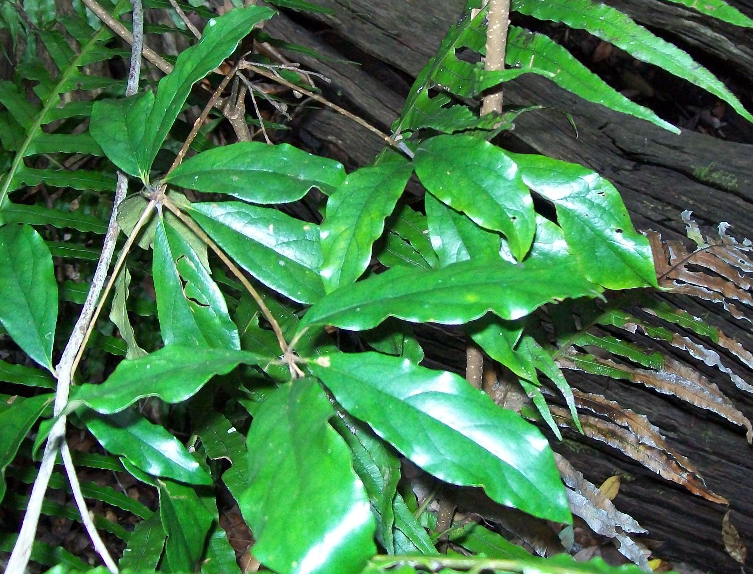 Rainforest Rainforest Information