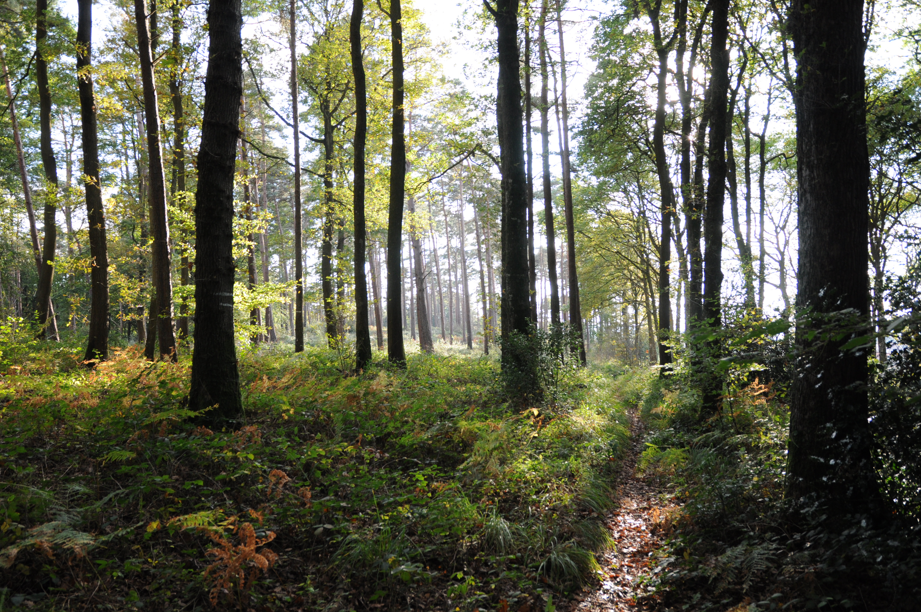 Roughly one in every 50 species of plant and vertebrate. Atlantic Mixed Forests Wikipedia
